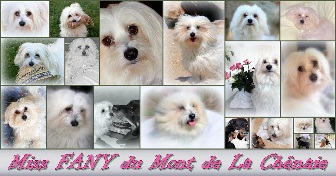 Miss FANY du Mont de La Chênaie