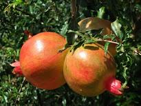 Seção Frutos & Frutas