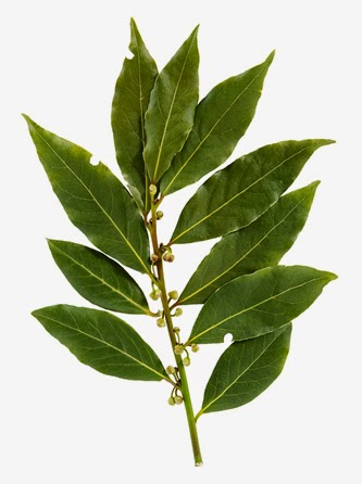 Benefits And Nutrition Of Bay Leaves For Health