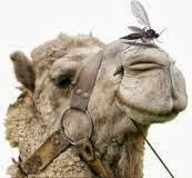 Jesus Christ called the Pharisees: Blind guides, who strain out a gnat, and swallow a camel. Mt. 23