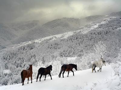 Caballos en la nieve junto a las montañas - Horses
