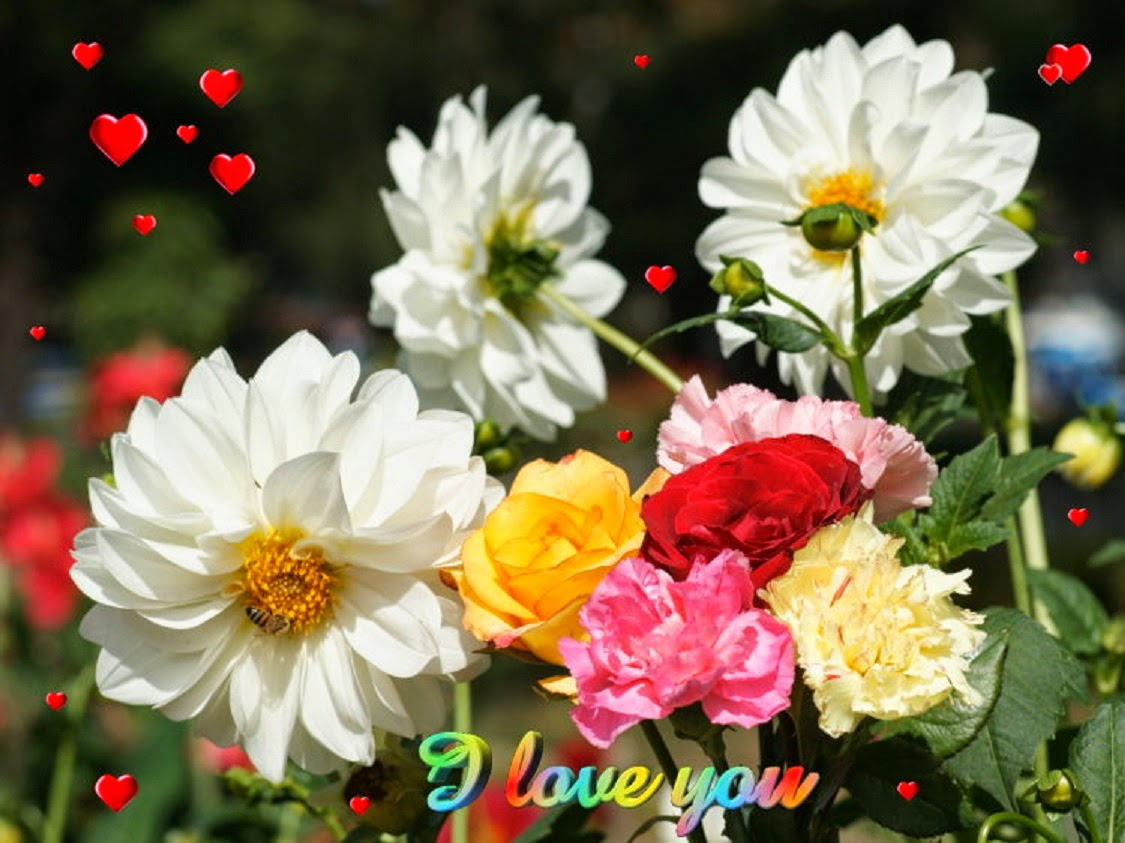cute and beautiful flowers wallpapers free download - free all hd