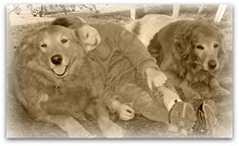 In loving memory of Precious & Buster