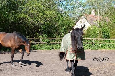 hästar. foto: Reb Dutius