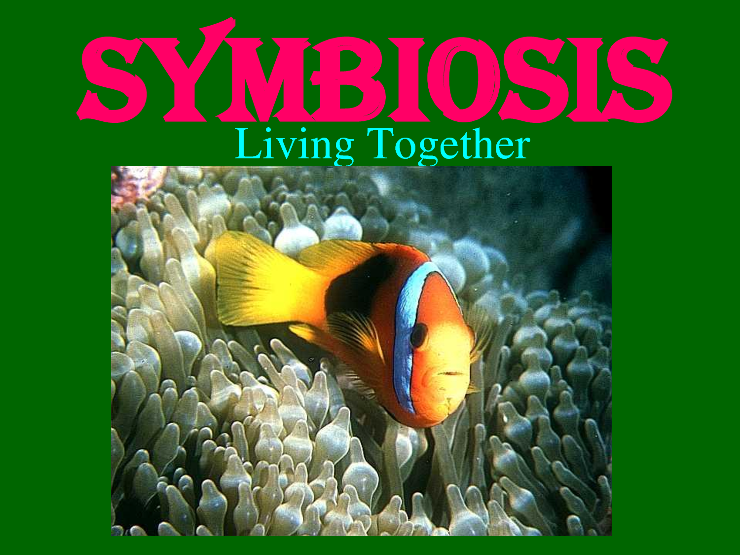symbiotic relationship Symbiosis is a powerful force in business here are six guidelines for forming adaptable symbiotic relationships.