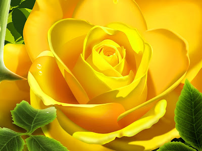 HQ Yellow Rose Wallpaper