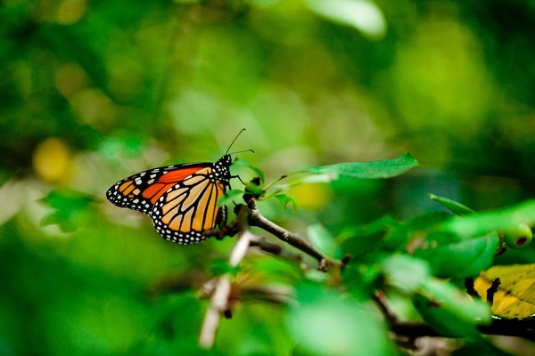 The Best Butterfly Images Beautiful Full HD