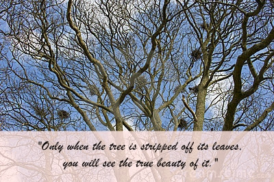 The bare tree where nests are attached to its branches
