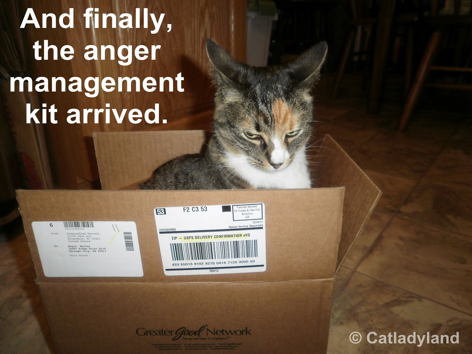 Anger Management and a Cattoo Winner