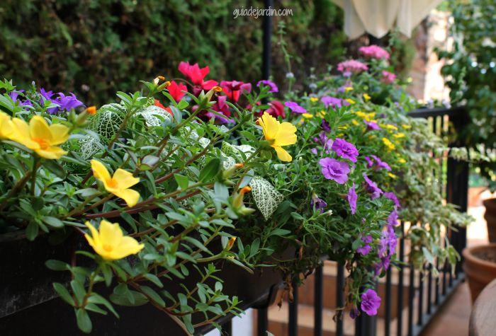 Variedad de plantas anuales
