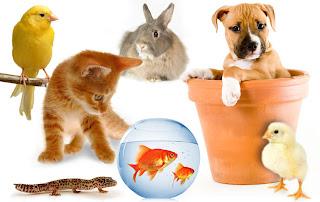 negocios rentables de animales