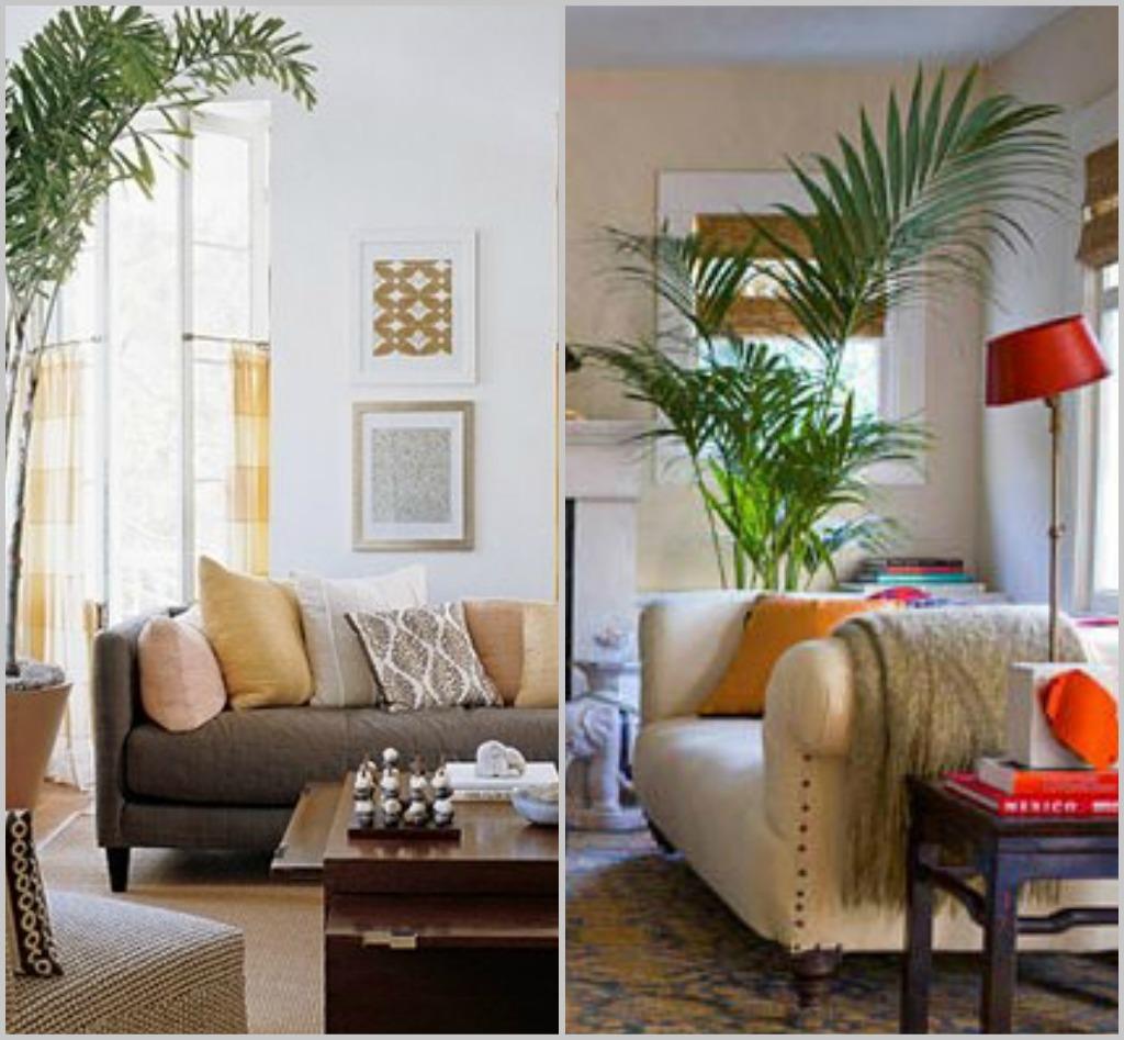 design megillah indoor potted trees palm tree living room qv