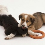 How To Stop Puppy Biting Problem