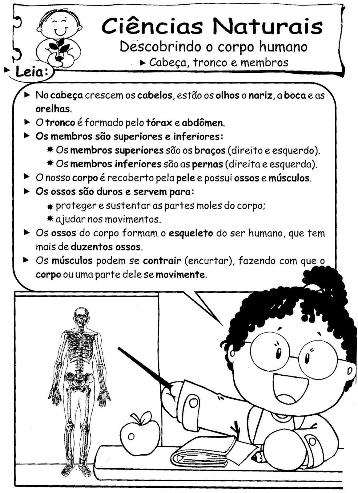 Atividades Sobre O Corpo Humano