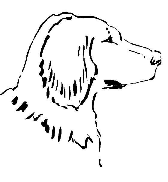 Pintar é divertido - Desenhos para colorir: Cães