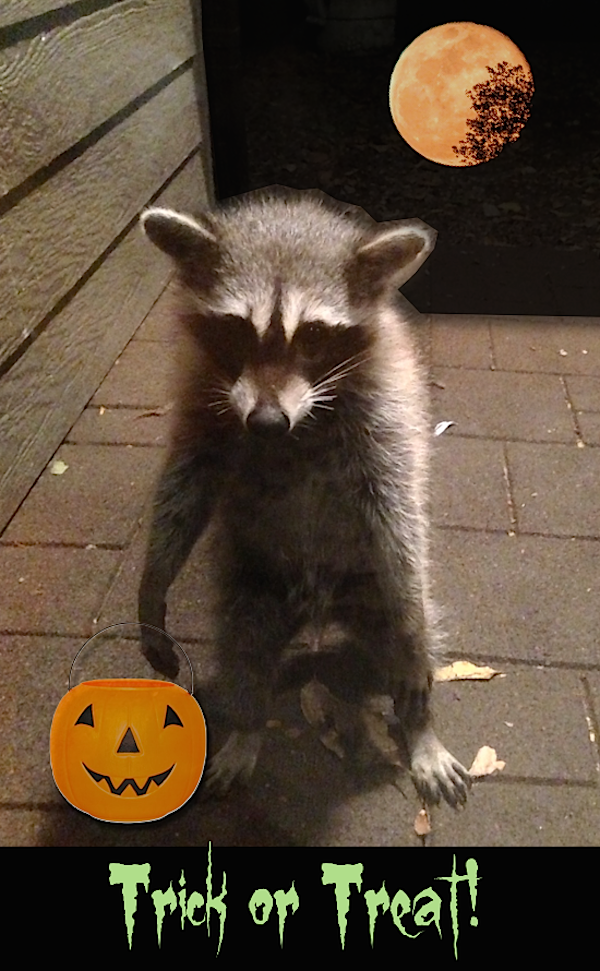A raccoon at my back door! Just had to trick out this photo for Halloween. | Take a Haunted Tour at I Gotta Create!