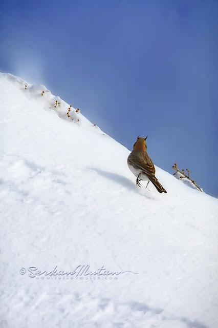 kar ve siste fotoğraf çekimi nasıl yapılır