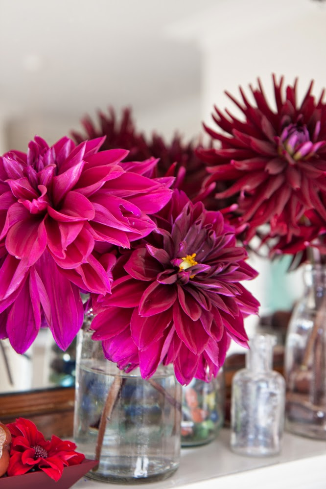 Dahlia's from the garden by Alexis at www.somethingimade.co.uk