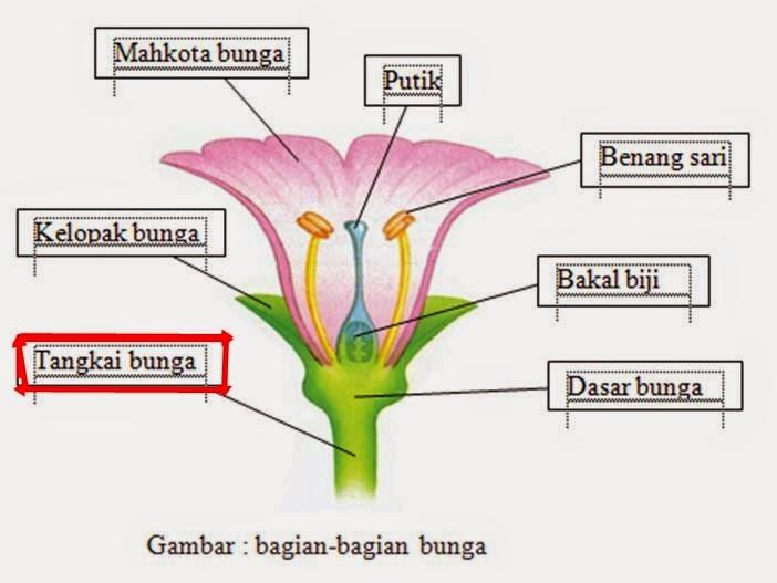 Morfologi tumbuhan mei 2015 yaitu bagian bunga yang masih jelas bersifat batang padanya seringkali terdapat daun daun peralihanyaitu bagian bagian yang menyerupai daun ccuart Image collections
