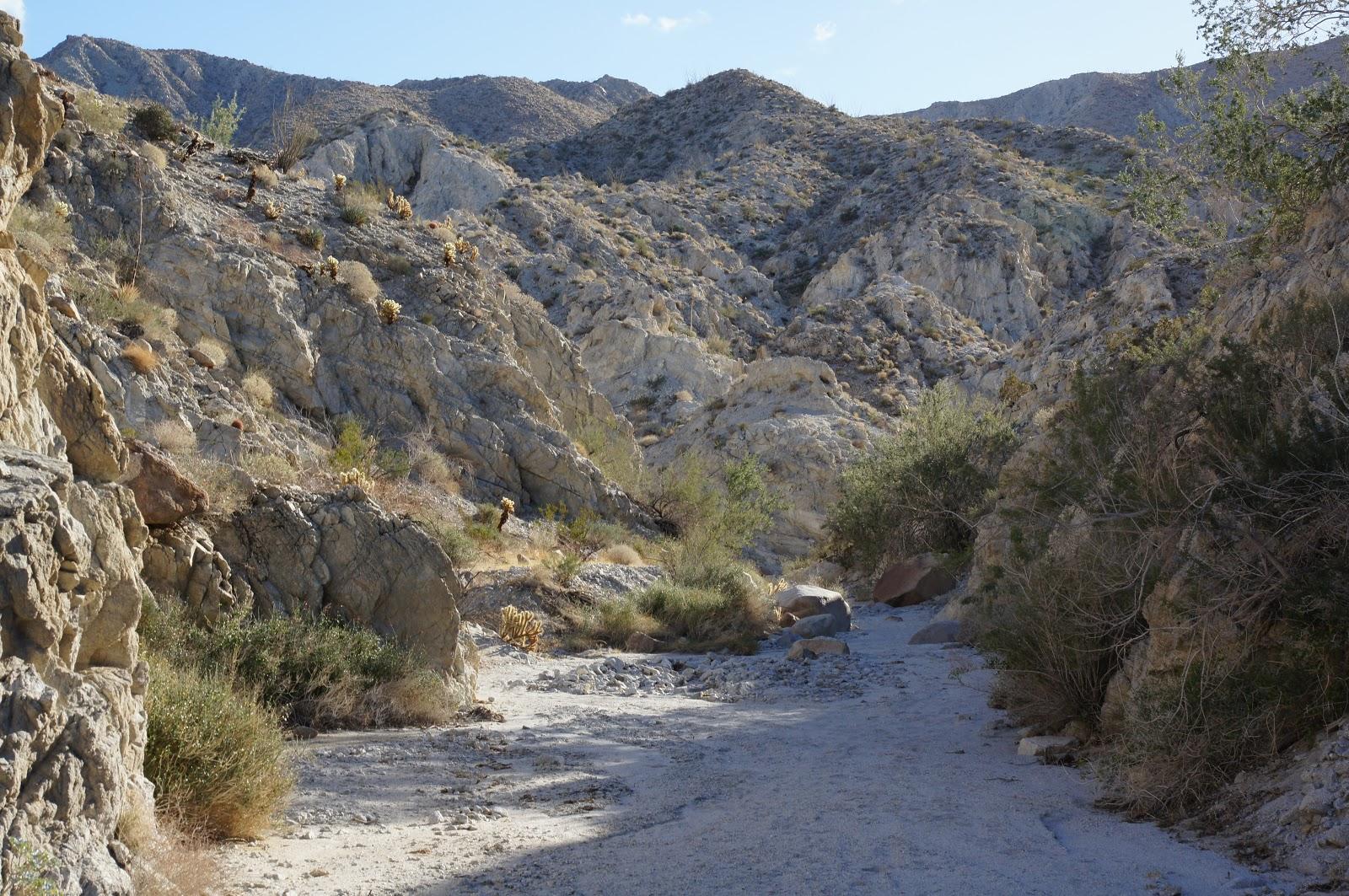 Mamma Quail Hiking California : An Unexpected Hike