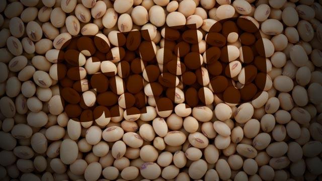 http://4.bp.blogspot.com/-EwSzNc0FKMI/Va0pDn59dgI/AAAAAAAAp3k/1YOwT3i2ORI/s800/gmo-soy.jpg