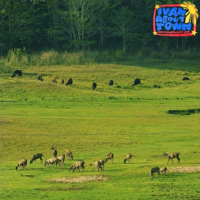 Periyar Wildlife Sanctuary & National Park, Kerala, India