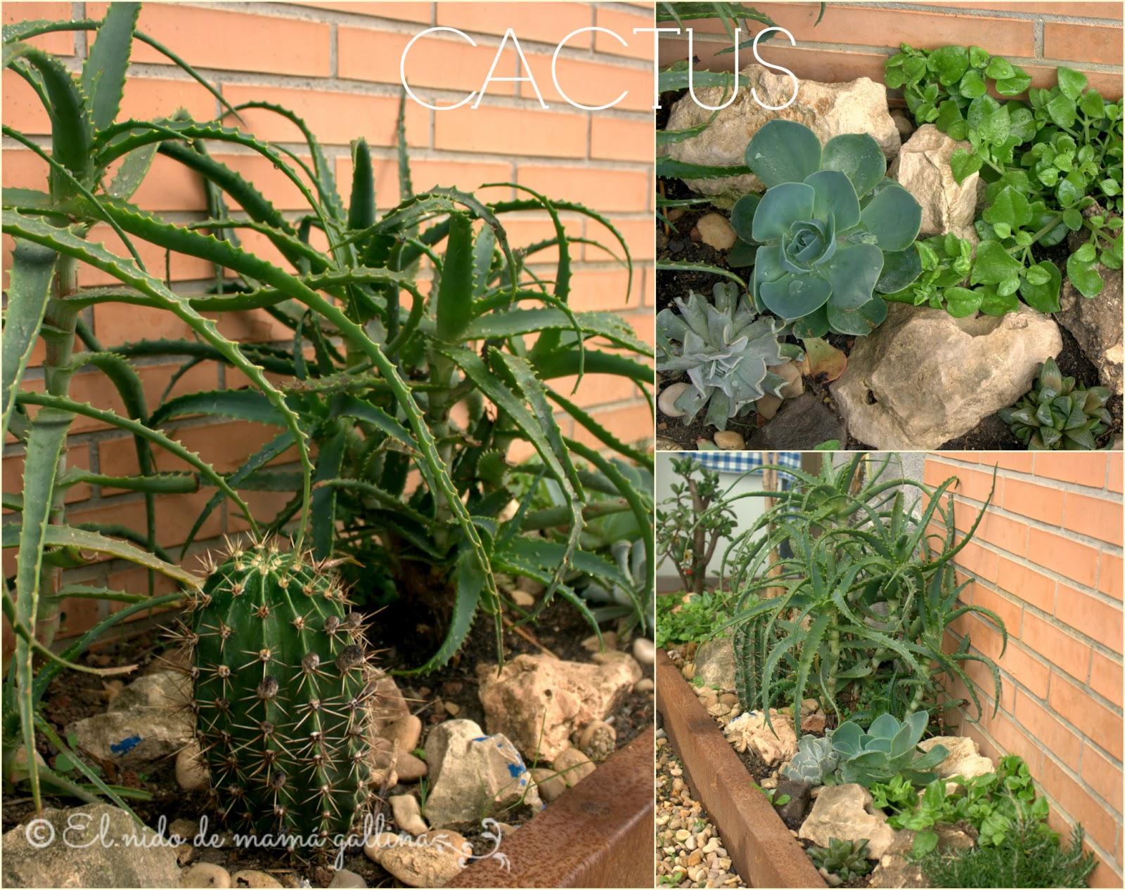 Mini Jardines De Cactus Mini Jardines De Cactus Taller De