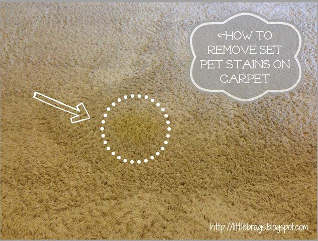 How to Remove Set Pet Stains on a Carpet