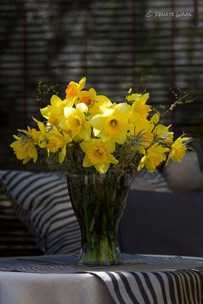 Blumenstrauss aus Narzissen - aus dem Garten im März