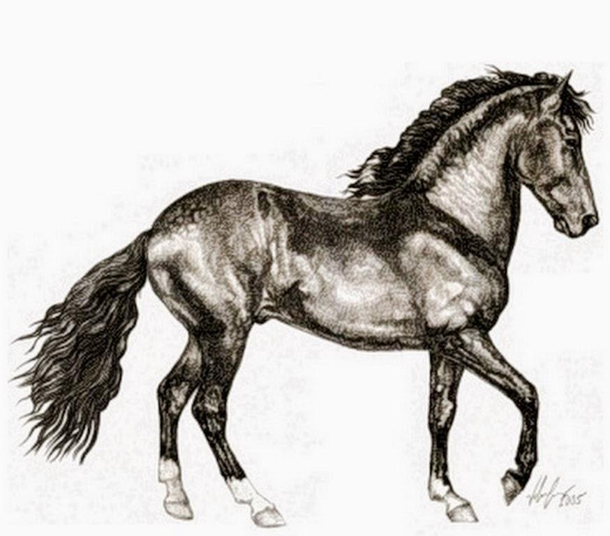pinturas-de-caballos-a-lapiz