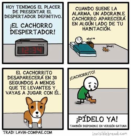 imagenes graciosas - el cachoro despertador