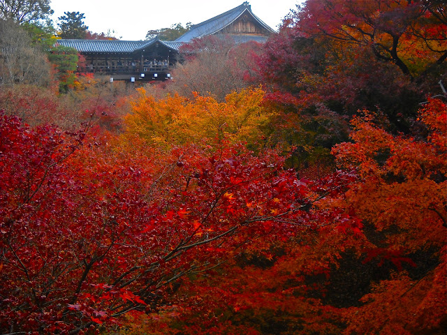 Valley of red maples at Tofuku-ji