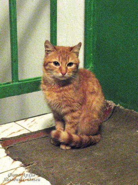 Кот коридорный