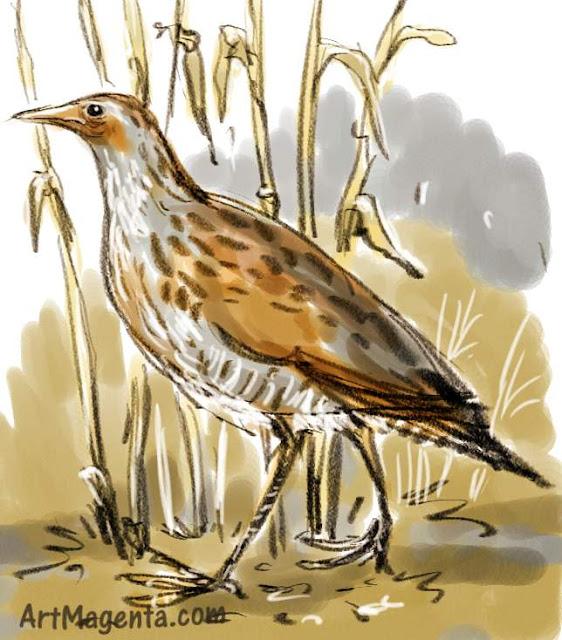 En fågelmålning av en kornknarr från Artmagentas svenska galleri om fåglar.