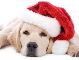 christmas gift Christmas Puppy Wallpapers
