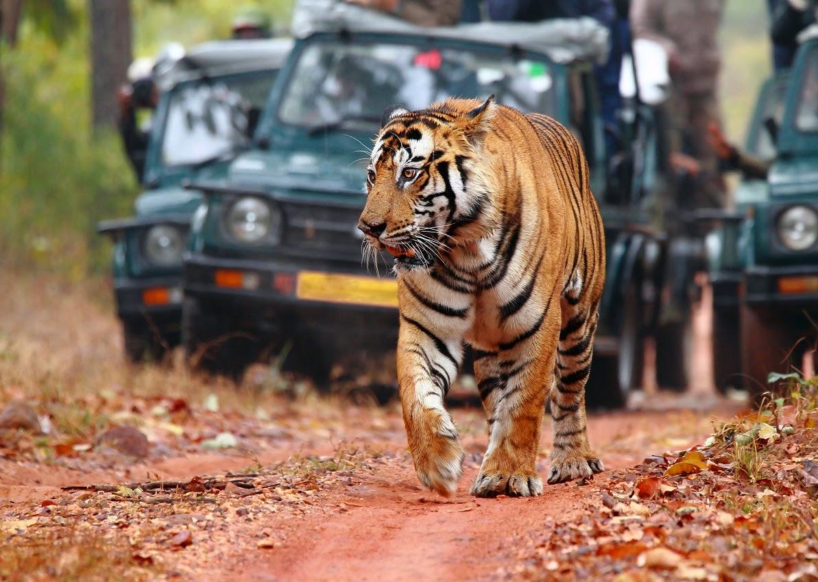 India - s Best Wildlife Safaris
