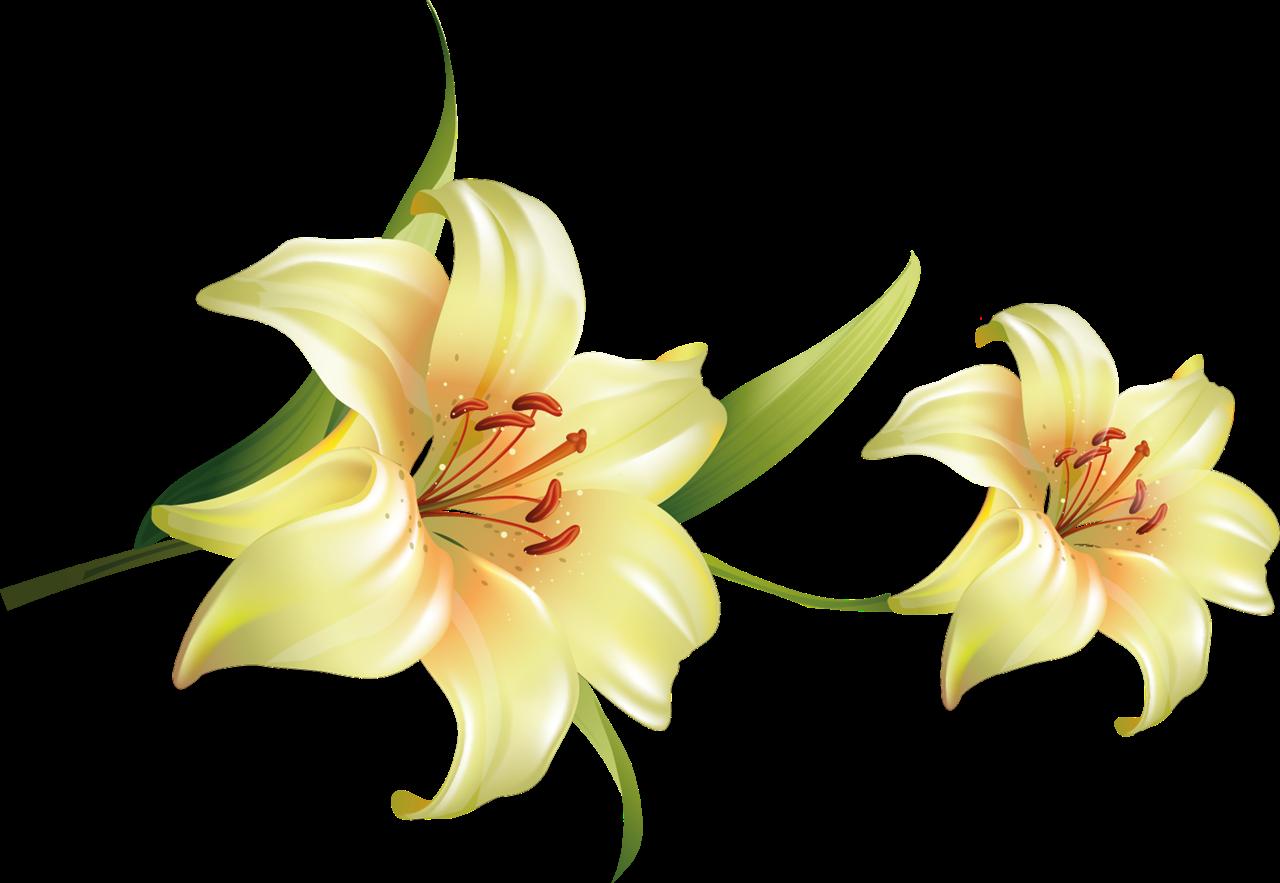 flores transparentes IMAGENES PNG Pinterest - Imagenes De Flores Transparentes