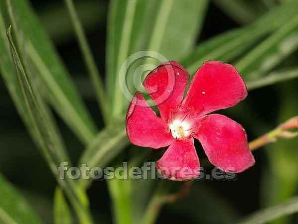 Las plantas sembrando un arbol - Plantas ornamentales venenosas ...