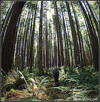 olympic coast forest