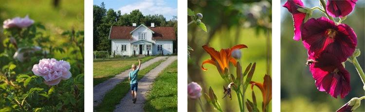 Sommer i den svenske have