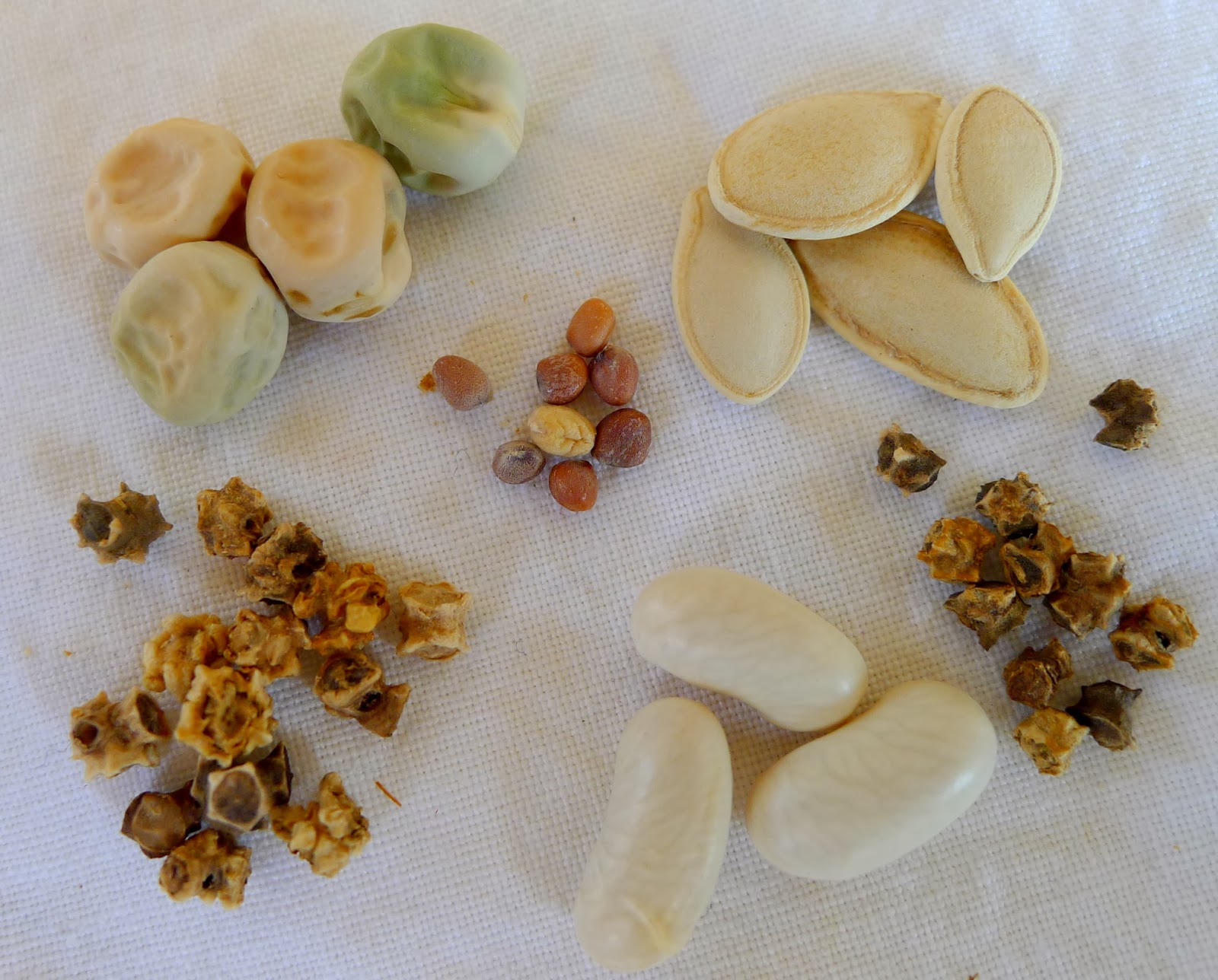 Food security, seed diversity