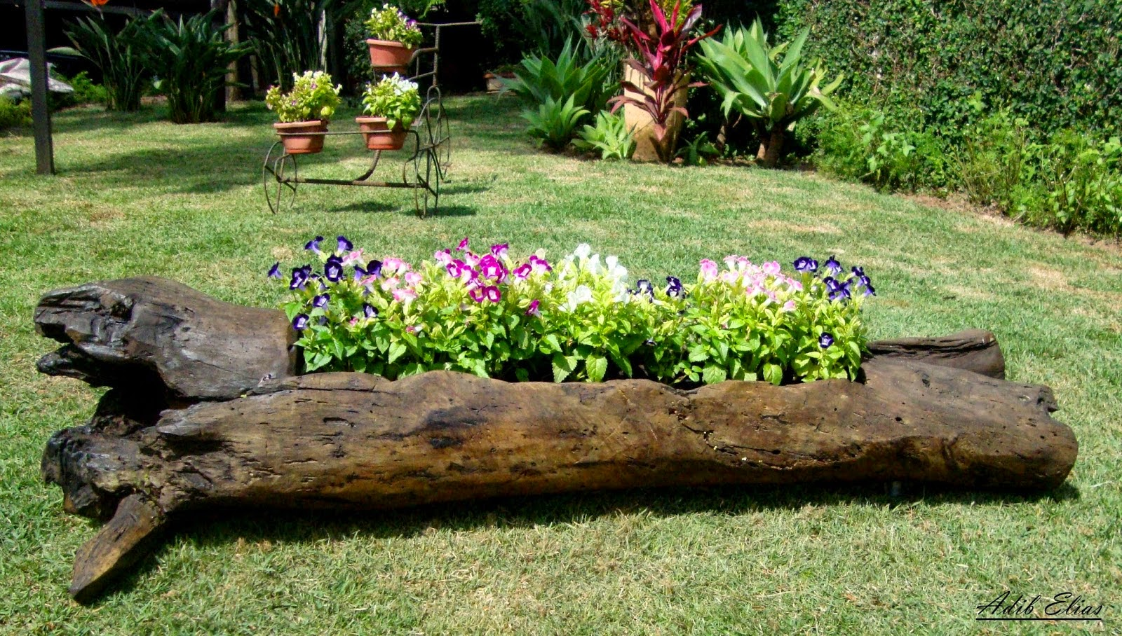 Troncos e raizes: Floreiras em troncos de madeira reciclada #799C2F 1600x908