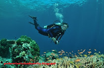 Scuba diving is magical in the Perhentians