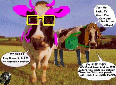 Gay cows