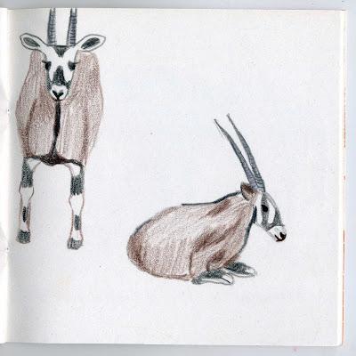 illustration animaux afrique