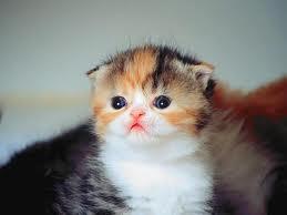 anak kucing yang mungil