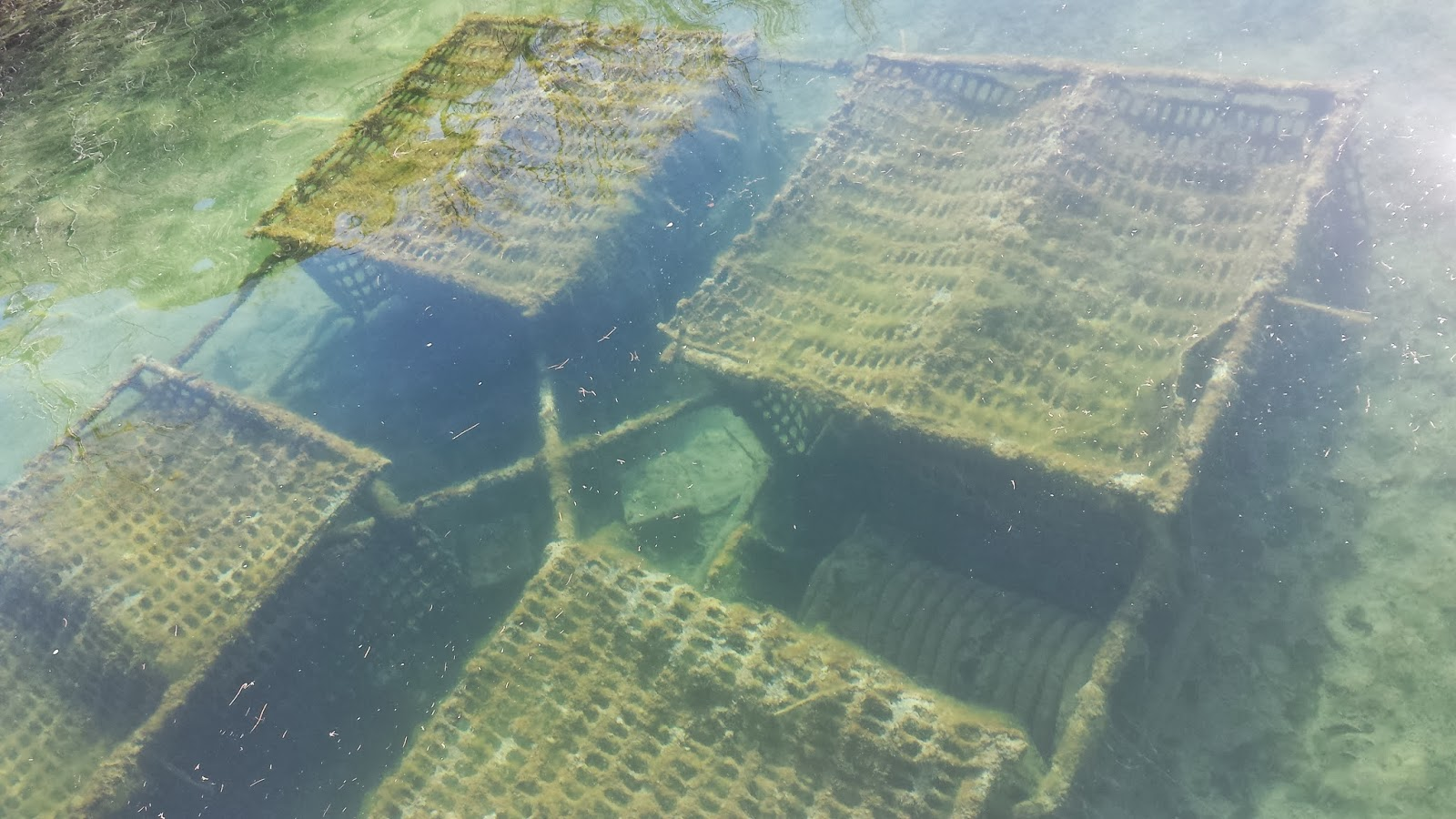T brinks fishing lake havasu recap for Lake havasu fishing