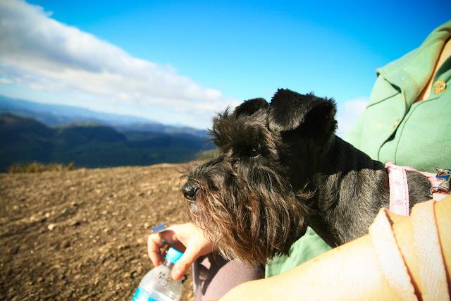 Monte Verde, São Paulo com amigo cachorro. Pet que viaja em família.