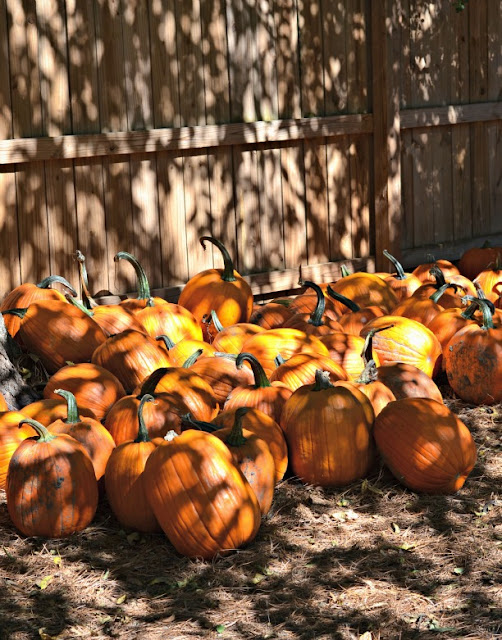 pumpkins tons of pumpkins by Cordier Events