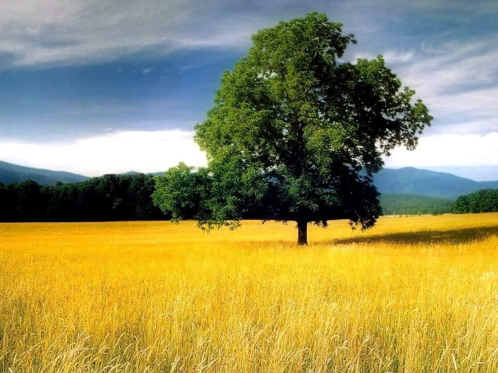 http://4.bp.blogspot.com/-F0STKBq_-2A/TcDHxwDmvfI/AAAAAAAAAAU/j1BHGJq6shM/s1600/pemandangan-alam.jpg